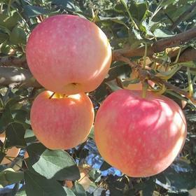 带皮吃 陕西当季应季红富士丑苹果新鲜水果10斤一箱 萍果平果包邮
