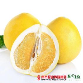 【酸甜多汁】太子妃精品白肉蜜柚 1个3斤左右