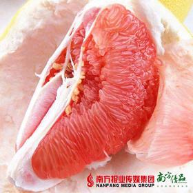【酸甜可口】梅州鸳鸯柚红肉蜜柚 1个2斤左右