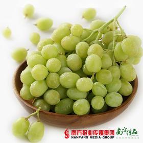 【脆甜多汁】新疆特级珍珠青提无核  2斤