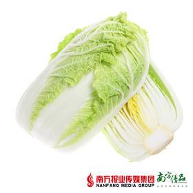 云南黄心菜大白菜 2斤左右