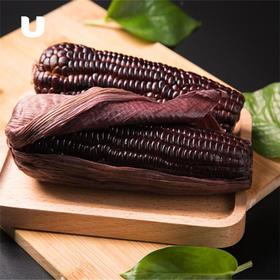 半岛优品 | 有机黑玉米 10根真空包装 非转基因甜糯玉米包邮