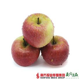 【新鲜粉甜】陕西洛川水晶嘎啦苹果  5斤  (70-75mm)