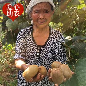 帮卖助农|湘西绿心猕猴桃酸甜多汁 入口细腻 5斤  20±5个 新鲜直达到家