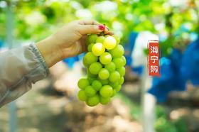 网红品种晴王葡萄来了,3斤装,超甜