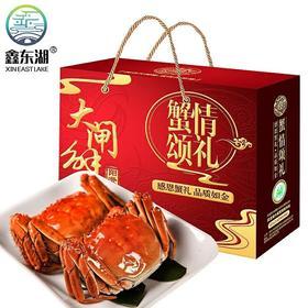 2份 现货阳澄湖大闸蟹特大全母蟹大螃蟹现货鲜活新鲜礼盒