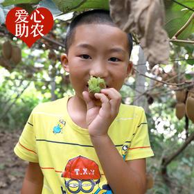 【爱心助农 坏果包赔】湘西天然绿心猕猴桃 果农原生态种植 清甜多汁 90克以上大果 净重5斤
