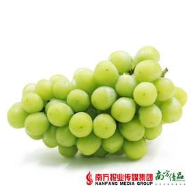 【纯香清甜】云南香印青提无籽 1斤