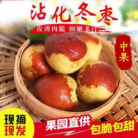 正宗山东沾化冬枣新鲜包邮5斤现摘现发脆甜牛奶枣子