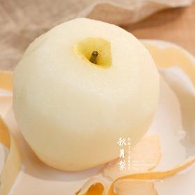 脆甜酥薄  秋月梨 |  润肺止咳  清热去火  皮薄核小果肉实  甘甜纯正有香气  美貌又香甜的梨中美人