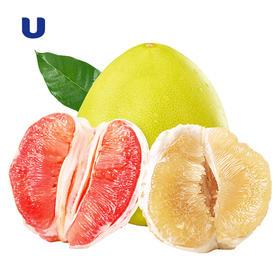 半岛优品 | 琯溪平和柚子 白柚红柚 3颗   水分最好的柚子 柚子味十足