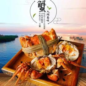 阳澄湖大闸蟹118、228、318,三种规格选择、包鲜活包原味!