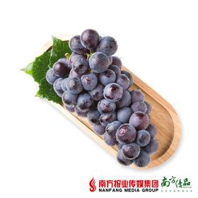 【酸甜多汁】辽宁精品一级甜巨峰   5斤/件