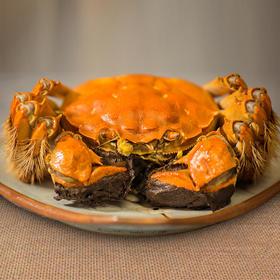 【阳澄不等】 正宗阳澄湖大闸蟹 米其林餐厅之选 蟹卡现货/大闸蟹预售  10.8开始发大闸蟹