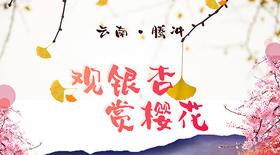 【观银杏—赏樱花游】2018昆明—大理古城—腾冲银杏—和顺古镇—诺邓古村—无量山樱花七日游