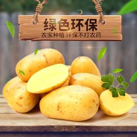甘肃定西精品土豆新土豆新鲜农家自种洋芋马铃薯大土豆包邮