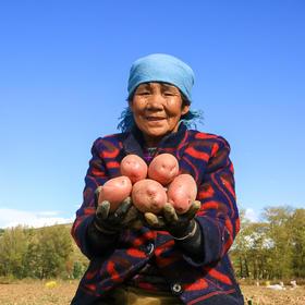 爱心助农丨大个头静乐红土豆 农家自种现挖现发  红皮轻松撕 甜丝丝 软 糯 香 甜  8斤装  包邮