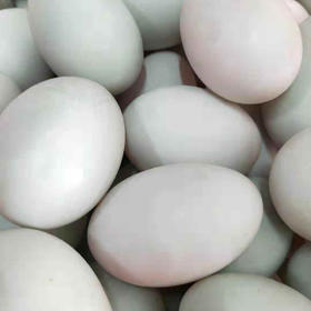 【爱心扶贫】儋州逢秋瓜菜专业合作社的跑海鸭蛋