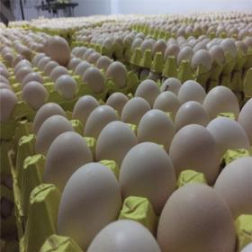 【爱心扶贫】海南顶香生态农业有限公司的咯咯香农家鸡蛋