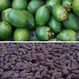 【爱心扶贫】万宁博雅槟榔产销专业合作社生产的槟榔干(白果)(不支持线上交易)