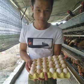 【爱心扶贫】澄迈贫困户李运山的农家鸡蛋