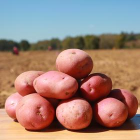 【枫颐】山西静乐红皮土豆8斤  | 农家土豆  营养丰富