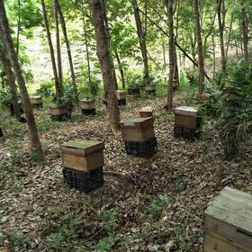 【爱心扶贫】白沙安定种养专业合作社扶贫的百花蜂蜜