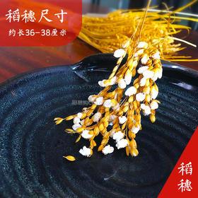 黄金麦穗盘饰 装盘神器,纯天然麦穗 风靡全国潮厨领域!