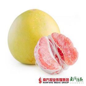 【汁丰瓤甜】琯溪盈香园红肉蜜柚 礼盒装 约8斤/箱  4个/箱