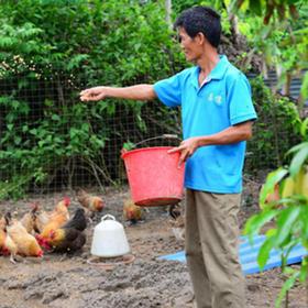 【爱心扶贫】海口贫困户吴清诚养殖的火山岩味鸡