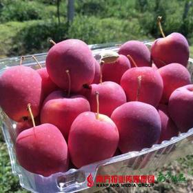 【脆甜口感】西域天香 香槟苹果 1盒  约400g/盒