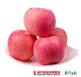 【肉密多汁】2018年新果 洛川新红富士苹果  约5斤 (果径80-85mm)