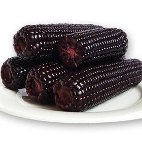 【10送1】有机新鲜黑糯玉米 黏粘香甜紫糯米棒包邮非转基因真空装