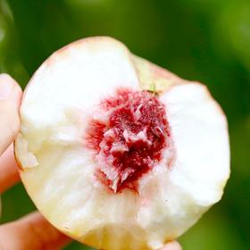 金秋红蜜桃 脆甜无比 果肉饱满清香 冬桃中的珍品 4.5斤礼盒装包邮