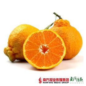 【甜带微酸】四川不知丑柑 85-90果  5斤 约9个