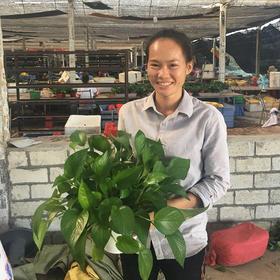 【爱心扶贫】东方上彩现代农业有限公司的东方绿萝