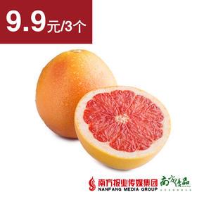 【微酸微苦】南非西柚  3个   约240g/个