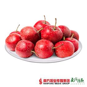 【酸甜开胃】山西运城 鲜山楂 2斤