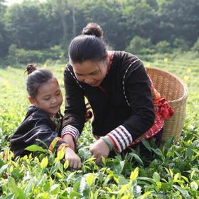 【爱心扶贫】白沙五里路茶叶专业合作社的有机茶