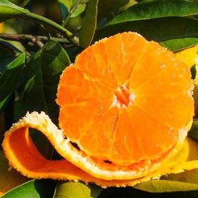 爱媛38 果冻橙 | 甘甜无核无渣  晶莹剔透果肉  像果冻一样Q弹  可以吸着吃的果冻橙  1个橙子可榨满1杯果汁