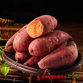 【甜糯美味】扶贫赣南三百山甜蜜红薯 5斤±3两
