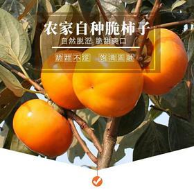 火晶柿子冻新鲜水果批发硬脆甜柿子10斤包邮当季整箱