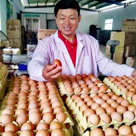 【爱心扶贫】海口伟德牧业有限公司的土鸡蛋