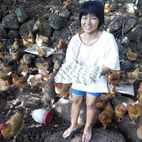 【爱心扶贫】海口贫困户王昌黄的龙桥林地农家鸡