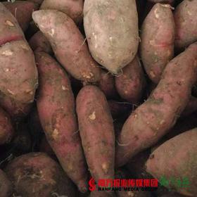 【口感甜糯】华农尚大 红心番薯  4斤±3两