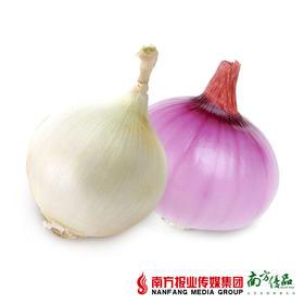 【清甜细腻】华农尚大 鸳鸯洋葱 一红一白 约1.5斤±2两
