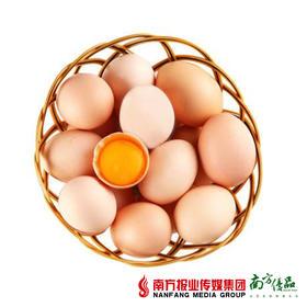 【营养美味】华农尚大 土鸡蛋  8个