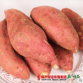 【进群专享】华农尚大 红心番薯  2斤左右