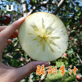 半岛优品 | 大凉山脆甜丑苹果 离城市远 离太阳近 自然成熟的味道 甜到心坎