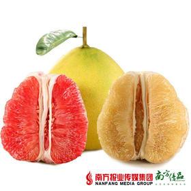 【酸甜多汁】梅州鸳鸯柚礼盒4个 两红两白 7-9斤/盒
